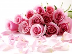 pink-roses-to-present.jpg
